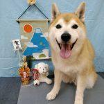 日本犬の 小太郎ちゃん